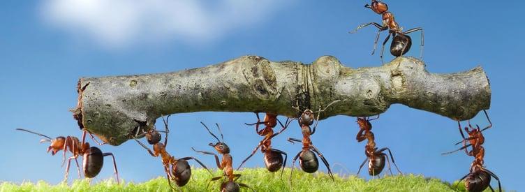 practicas del lider trabajo en equipo